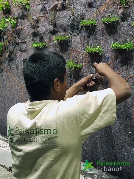 img-jardin-vertical-interior-guatemala-centro-empresarial-10