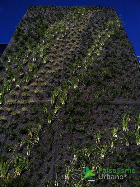 img-jardin-vertical-jerez-de-la-frontera-cadiz-4
