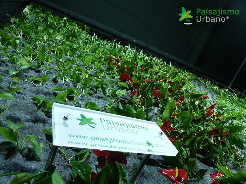 img-jardin-vertical-maskokotas-valencia-10