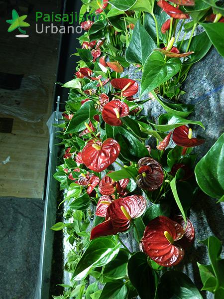 img-jardin-vertical-maskokotas-valencia-9