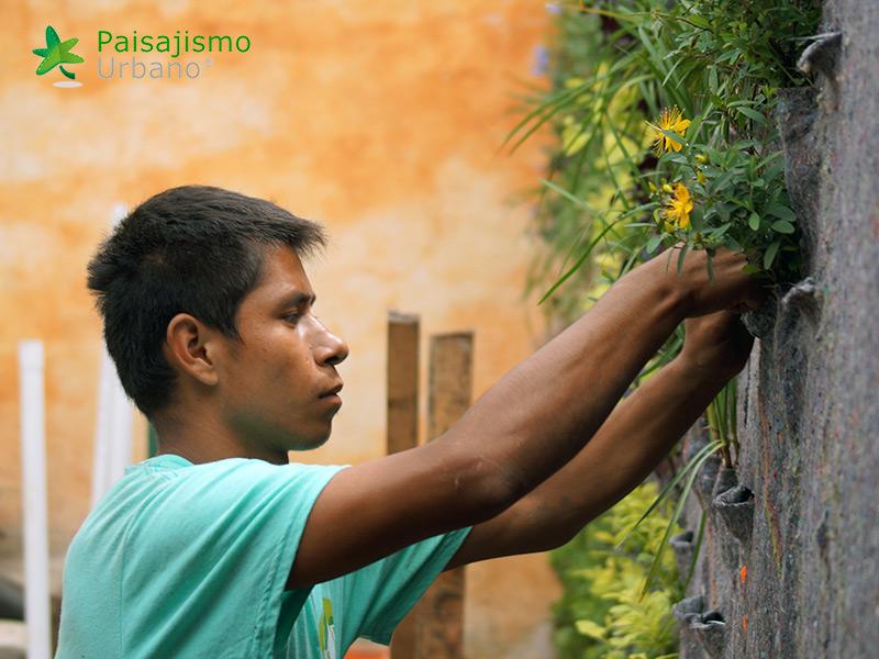 img-jardin-vertical-restaurante-antigua-guatemala-8