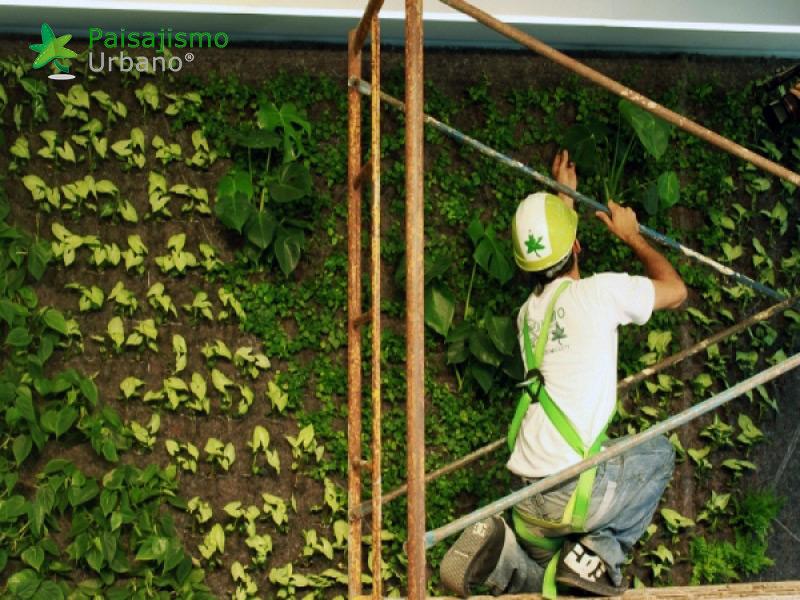 img-jardin-vertical-villa-lujo-ibiza-7