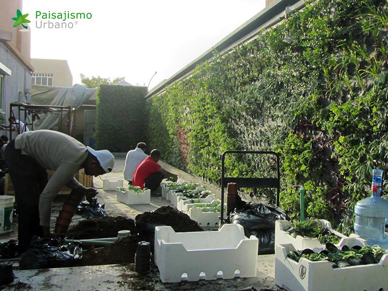 img-jardines-verticales-arabia-residencia-privada-10