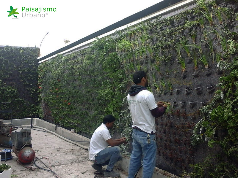 img-jardines-verticales-arabia-residencia-privada-13