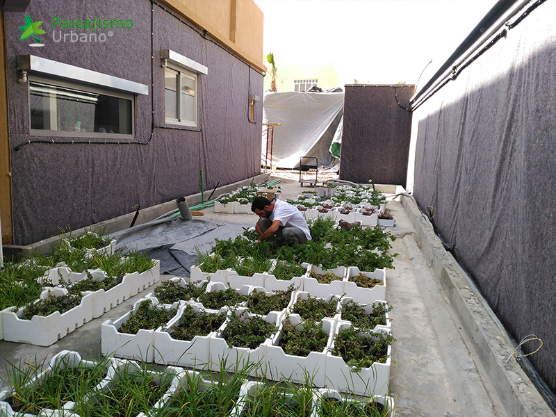 img-jardines-verticales-arabia-residencia-privada-6