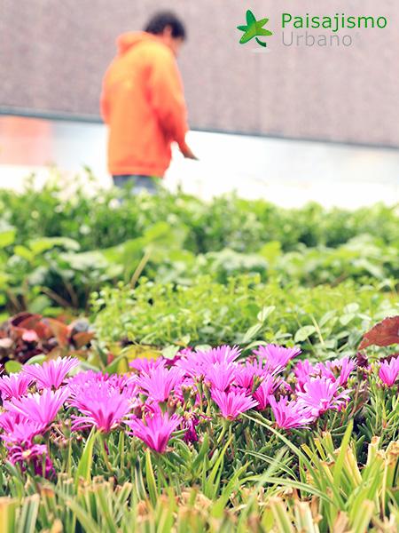 img-jardines-verticales-banquetes-indalo-elda-10