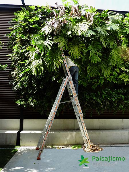 img-jardines-verticales-banquetes-indalo-elda-15