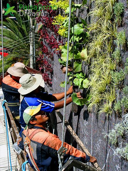 img-jardines-verticales-confederacion-empresarios-cochabamba-bolivia-6