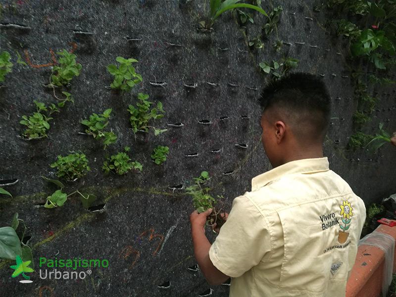 img-jardines-verticales-guatemala-restaurante-hacienda-real-2