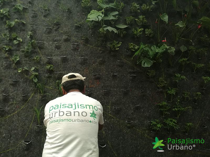 img-jardines-verticales-guatemala-restaurante-hacienda-real-3