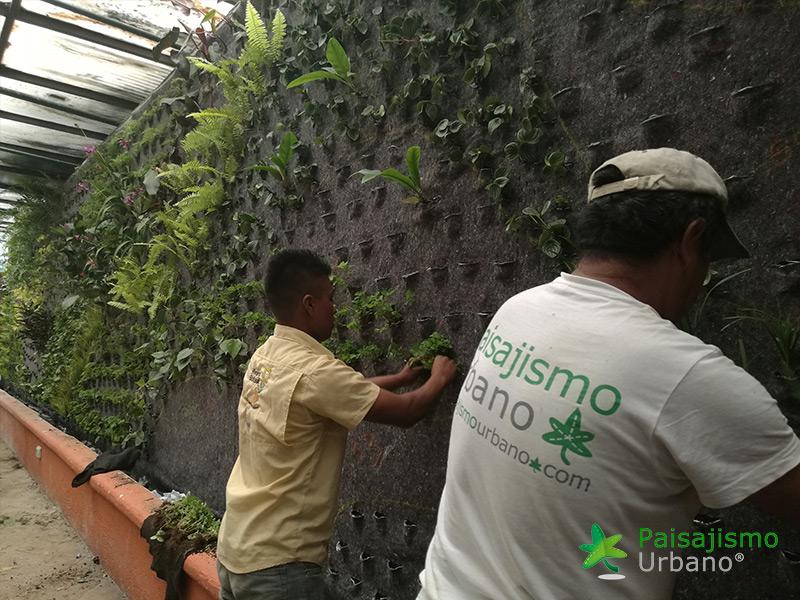 img-jardines-verticales-guatemala-restaurante-hacienda-real-4