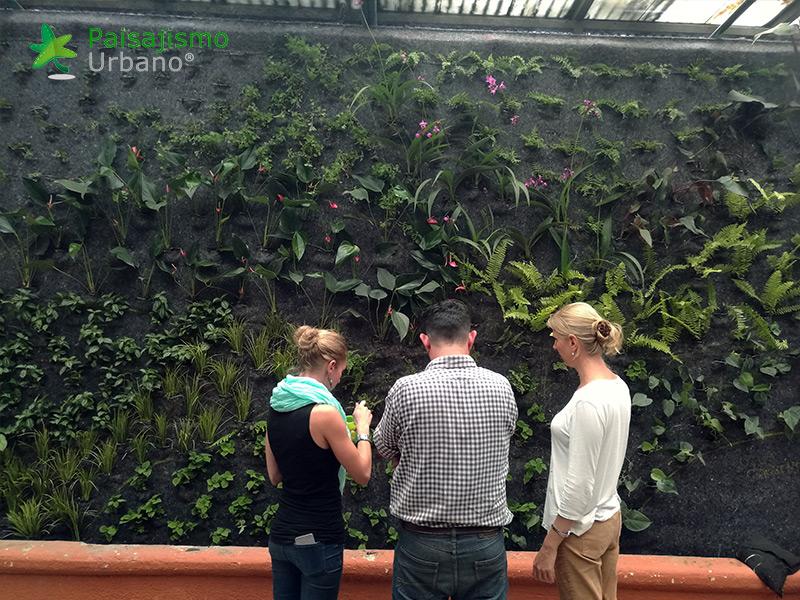 img-jardines-verticales-guatemala-restaurante-hacienda-real-6