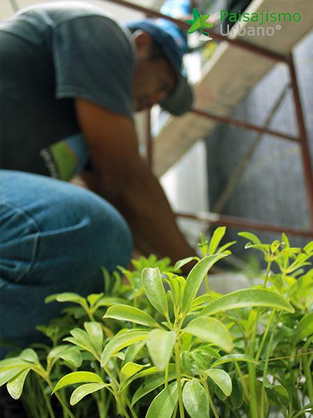 img-jardines-verticales-hotel-tikal-futura-guatemala-3