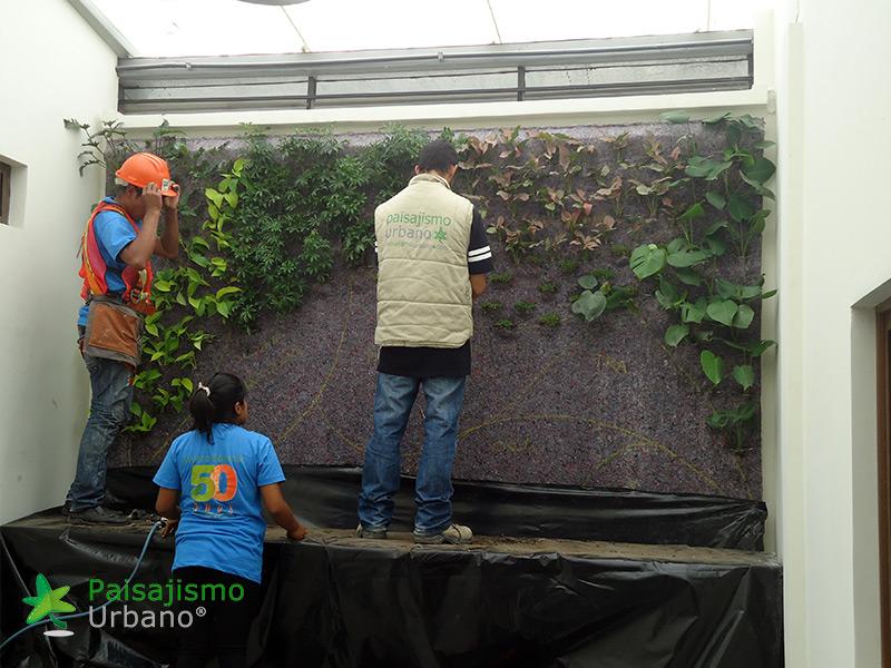 img-jardines-verticales-iglesia-cristo-ebenezer-guatemala-13