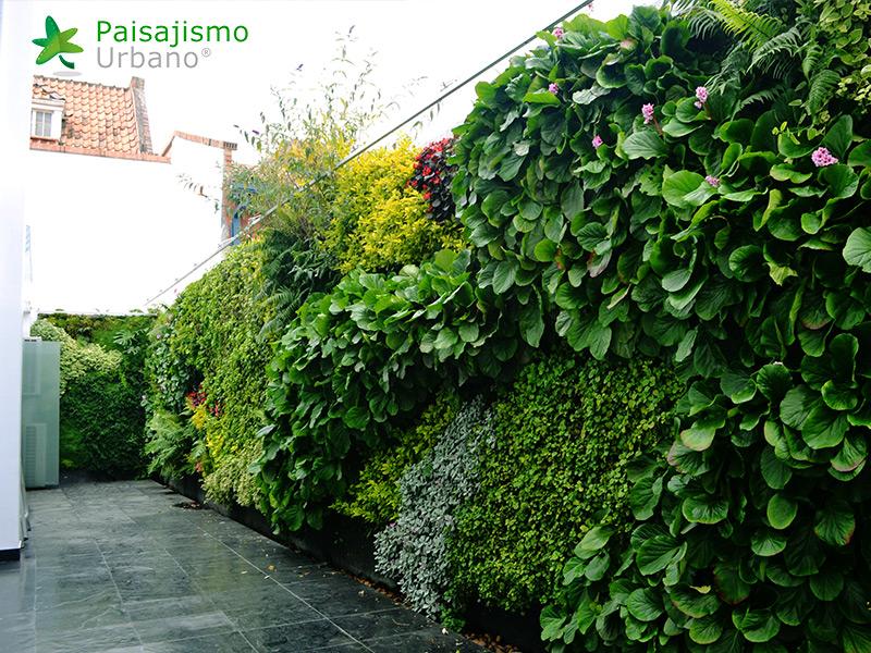 img-jardines-verticales-universidad-cesa-colombia-6