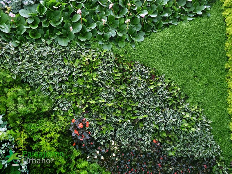 img-jardines-verticales-universidad-cesa-colombia-8