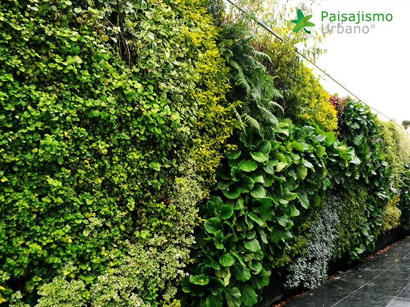 img-jardines-verticales-universidad-cesa-colombia-9