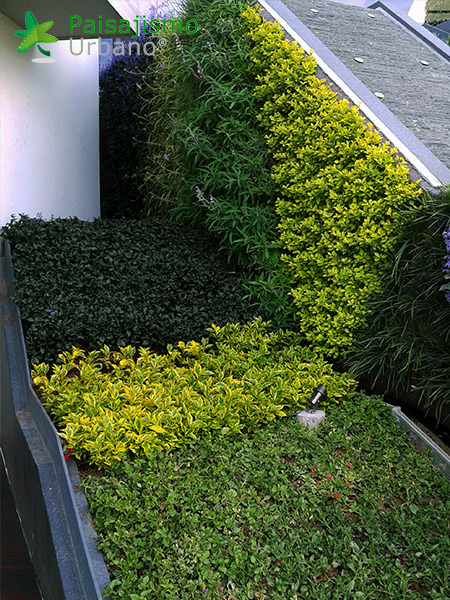 img-muros-verdes-residencia-morelia-mexico-26