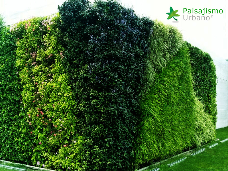 img-muros-verdes-residencia-morelia-mexico-35