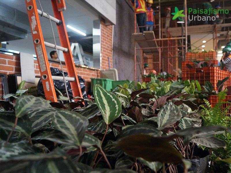 jardines-verticales-restaurante-san-martin-naranjo-mall-guatemala-2